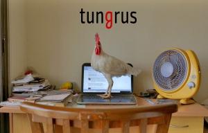 tungrus